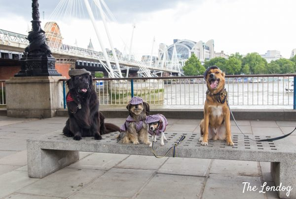 Photo of four dogs wearing Sherlock Holmes outfit sitting on a bench at CluedUpp event