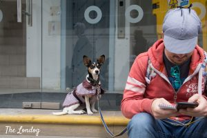 Photo of dog wearing Sherlock Holmes outfit sitting next to owner playing CluedUpp