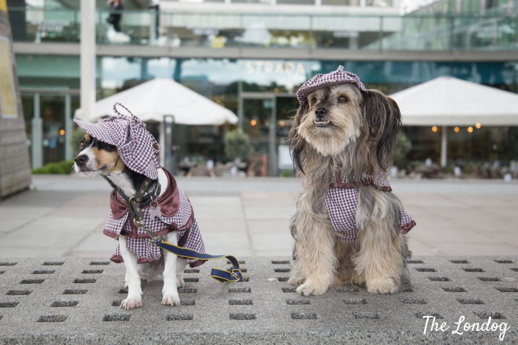 Two dogs in detective outfit