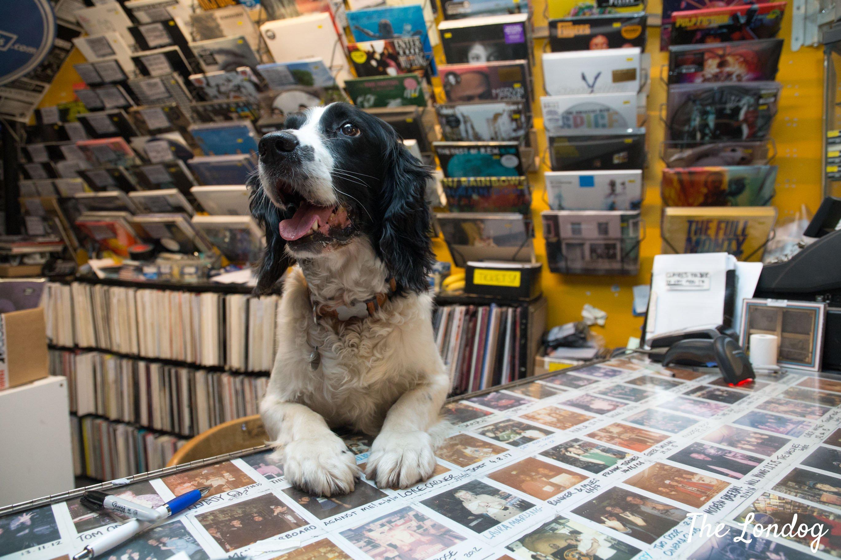 Dog at counter at Banquet Records store