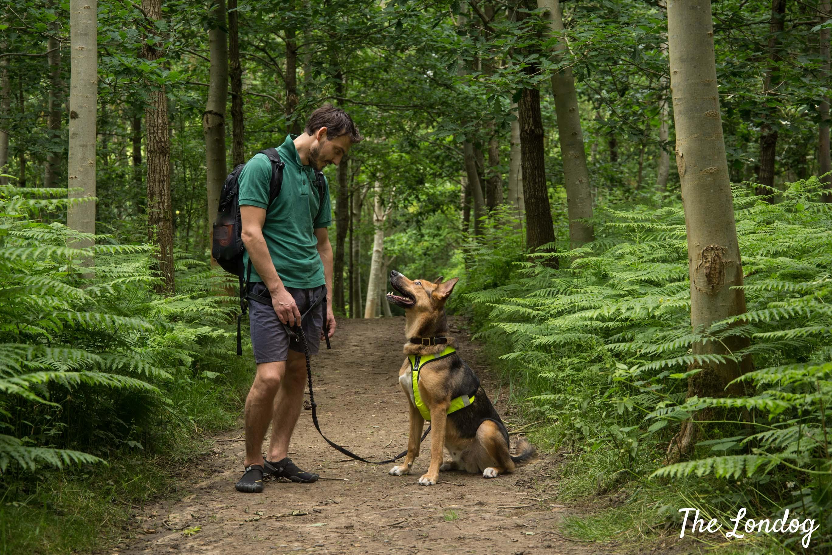 Dog at Hatfield House woodland