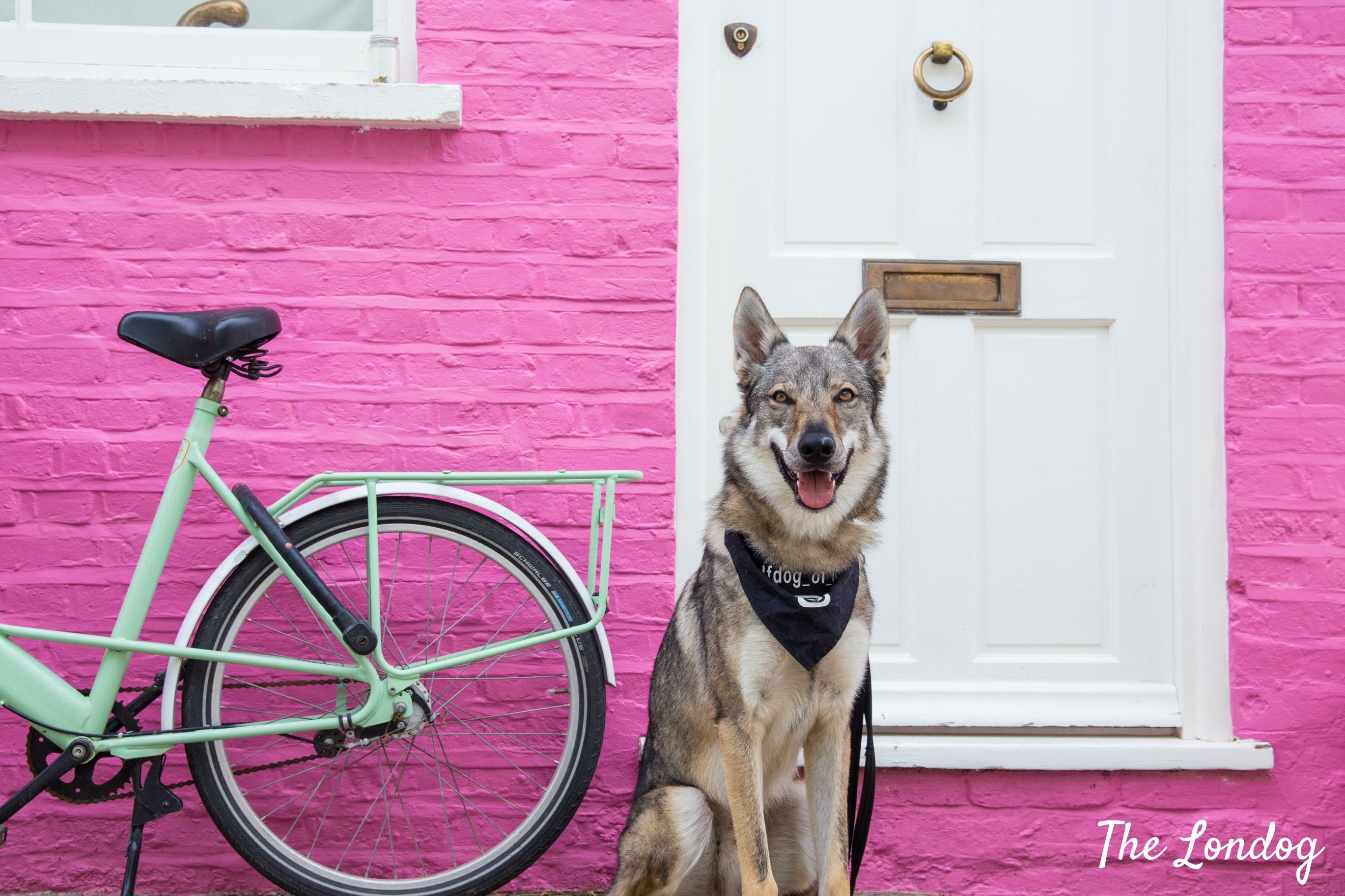 Dog in front of colourful wall in Notting Hill during dog-friendly tour