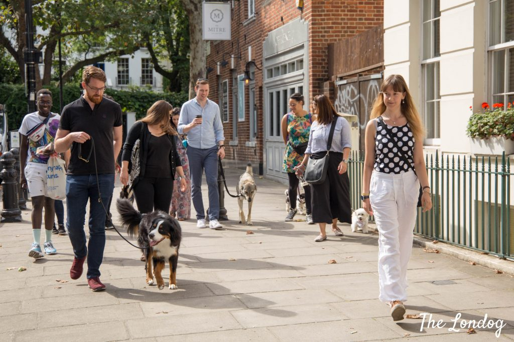 Photo of human and dog participants to the dog-friendly tour
