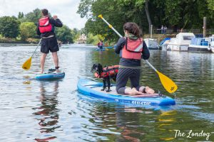 dog on SUP with woman