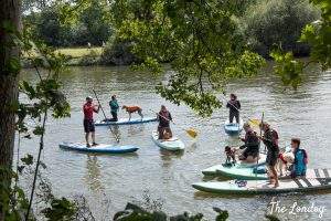 Group stad-up paddle boarding on the Thames with dogs