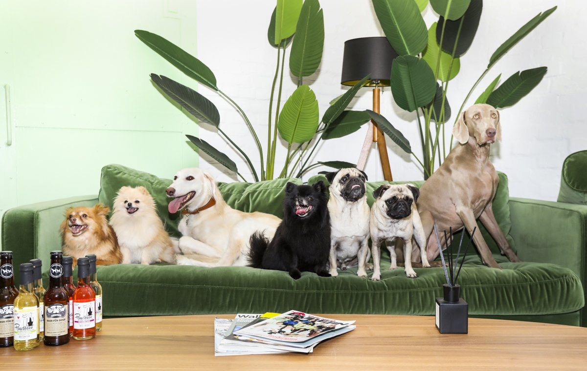 Cover photo with dogs for the pet conference