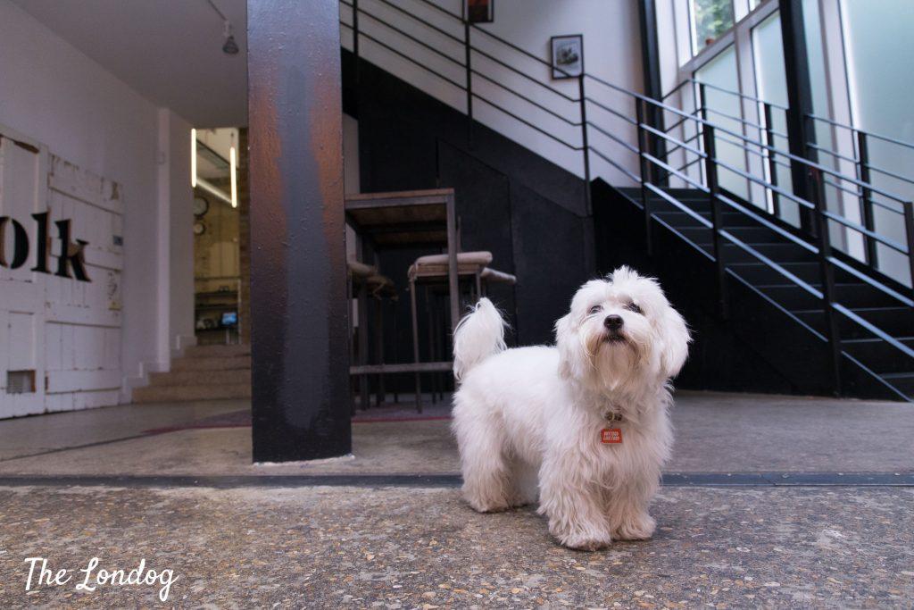 Little white Office dog AnalogFolk