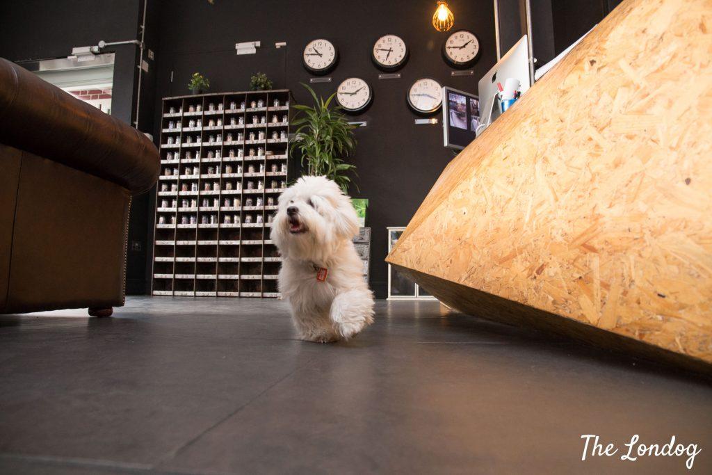 office dog runs at reception