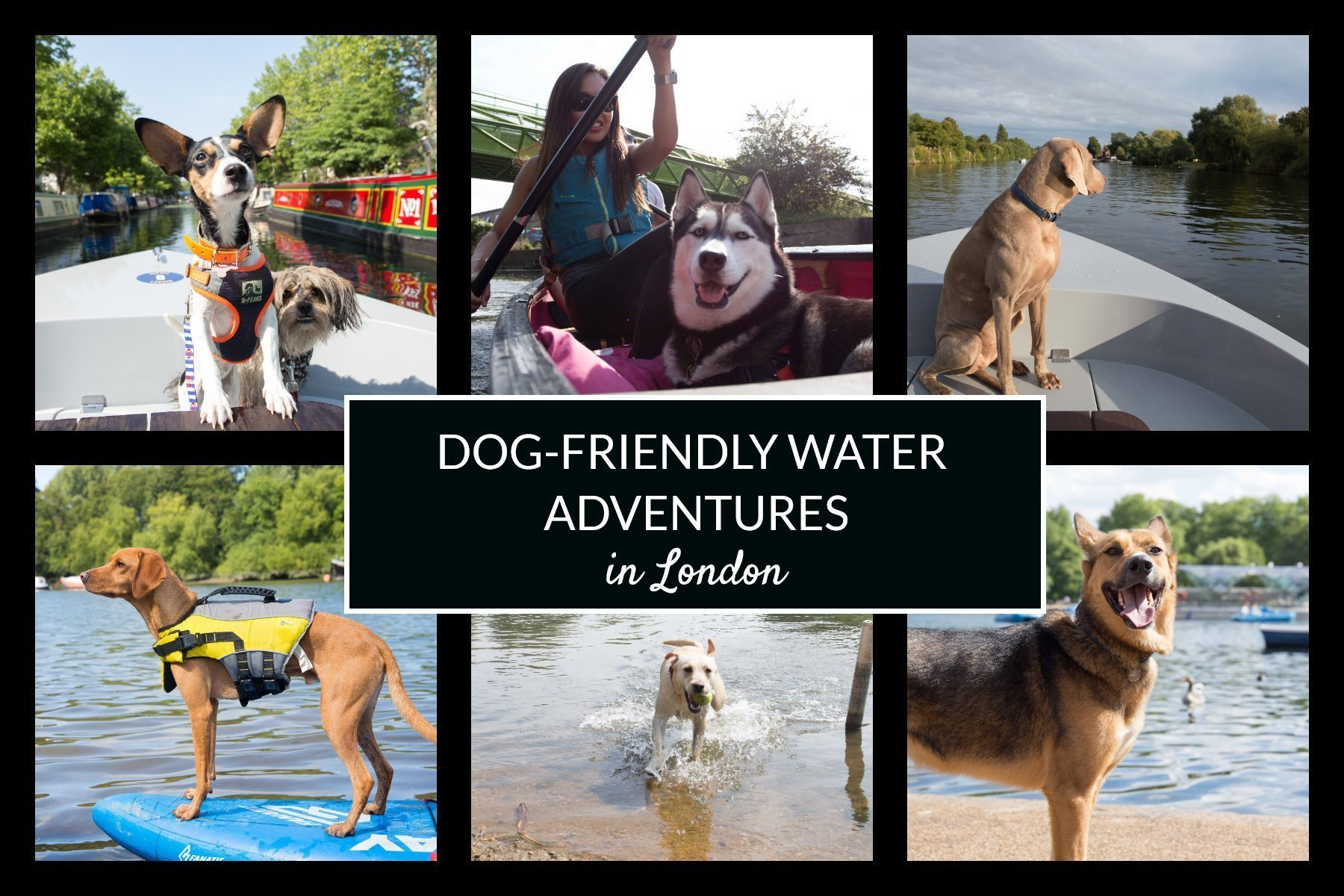 Cover of dog-friendly water adventures in London guide