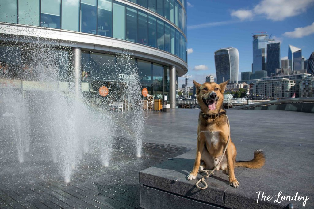 Dog sits next to sprinkles water fountain in London with city on background
