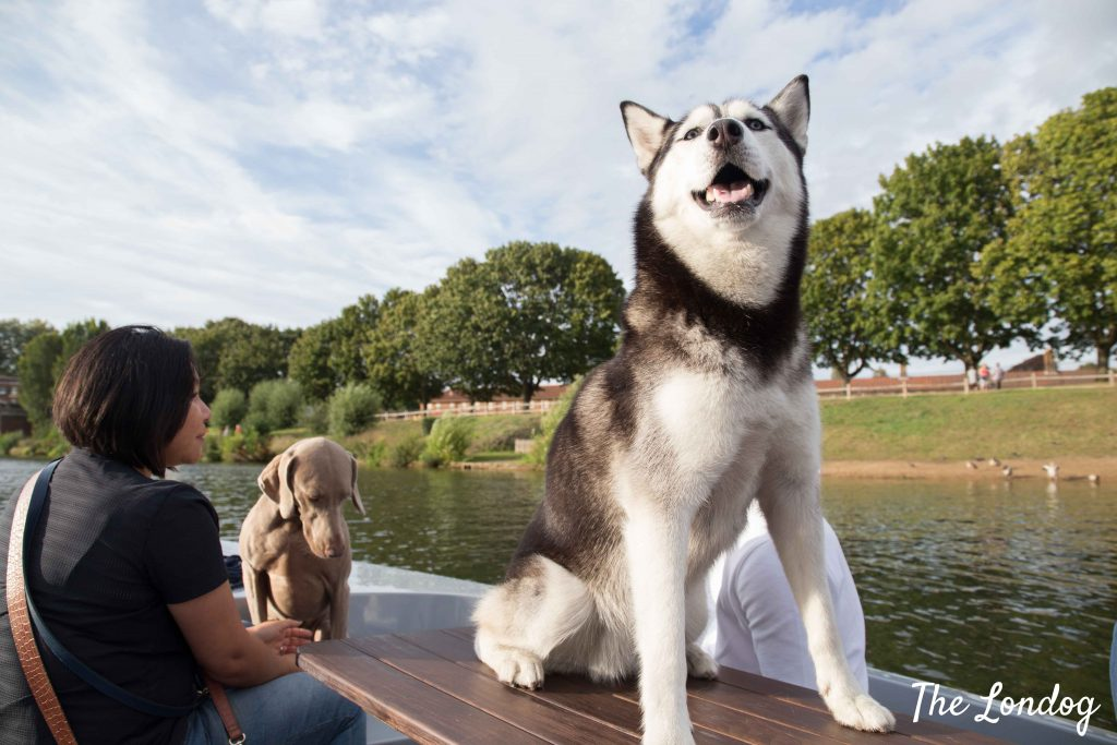 dog on table of Goboat boat