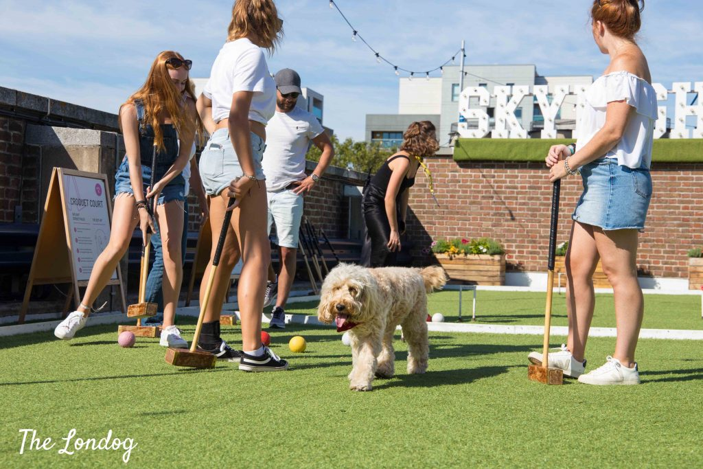 Dog on croquet court at Skylight London