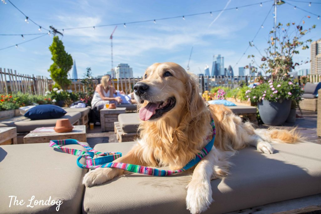 Labrador dog at Skylight London