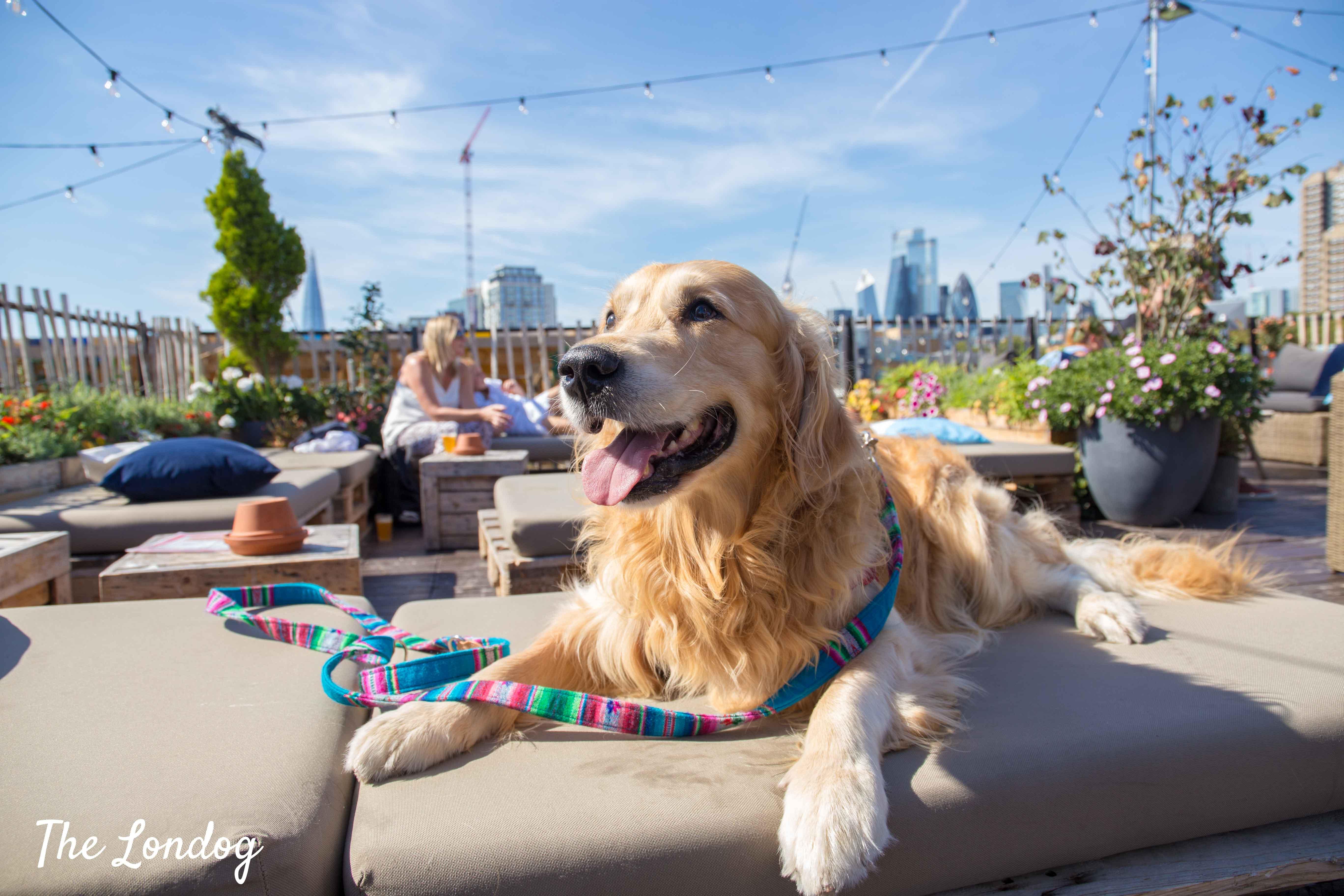 Labrador dog at Skylight London
