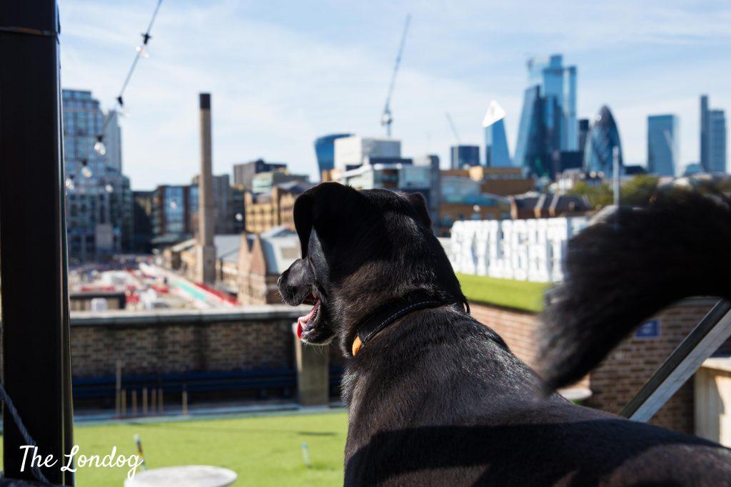 black dog at skylight london