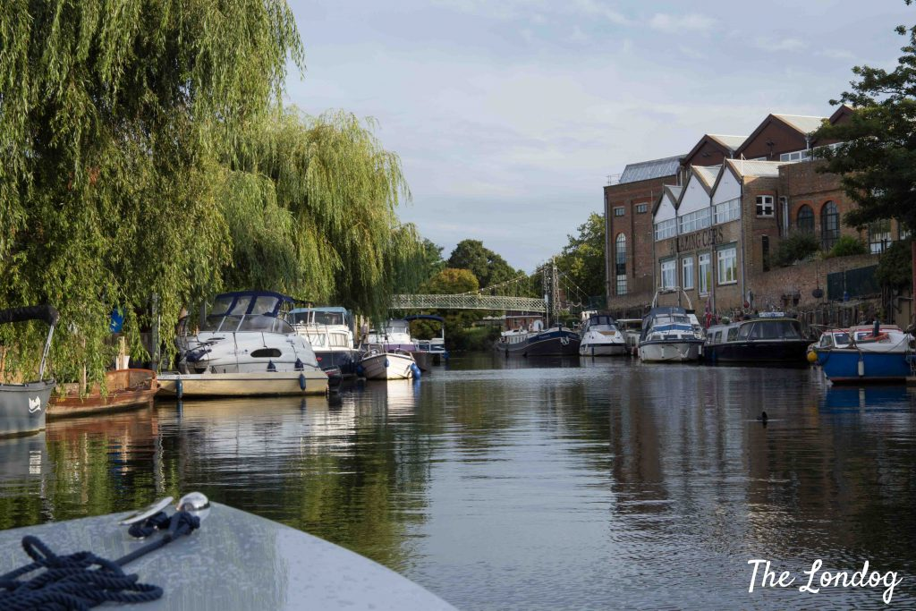 Thames with weeping willows