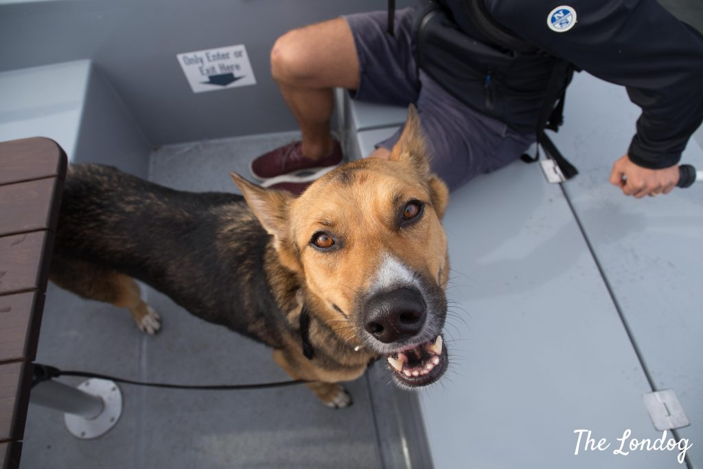 Dog smiling near the captain