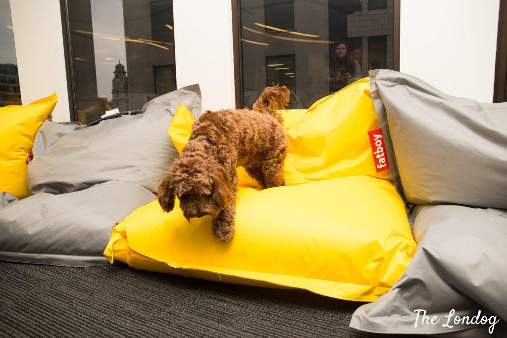 office dog on bean bag