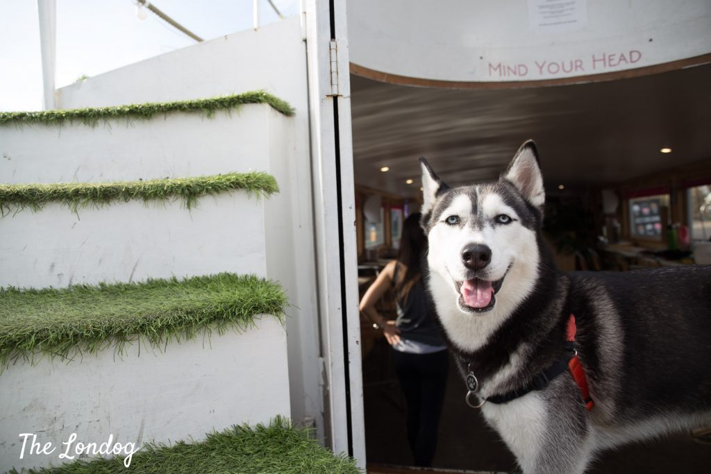 Husky dog at the Milk Float