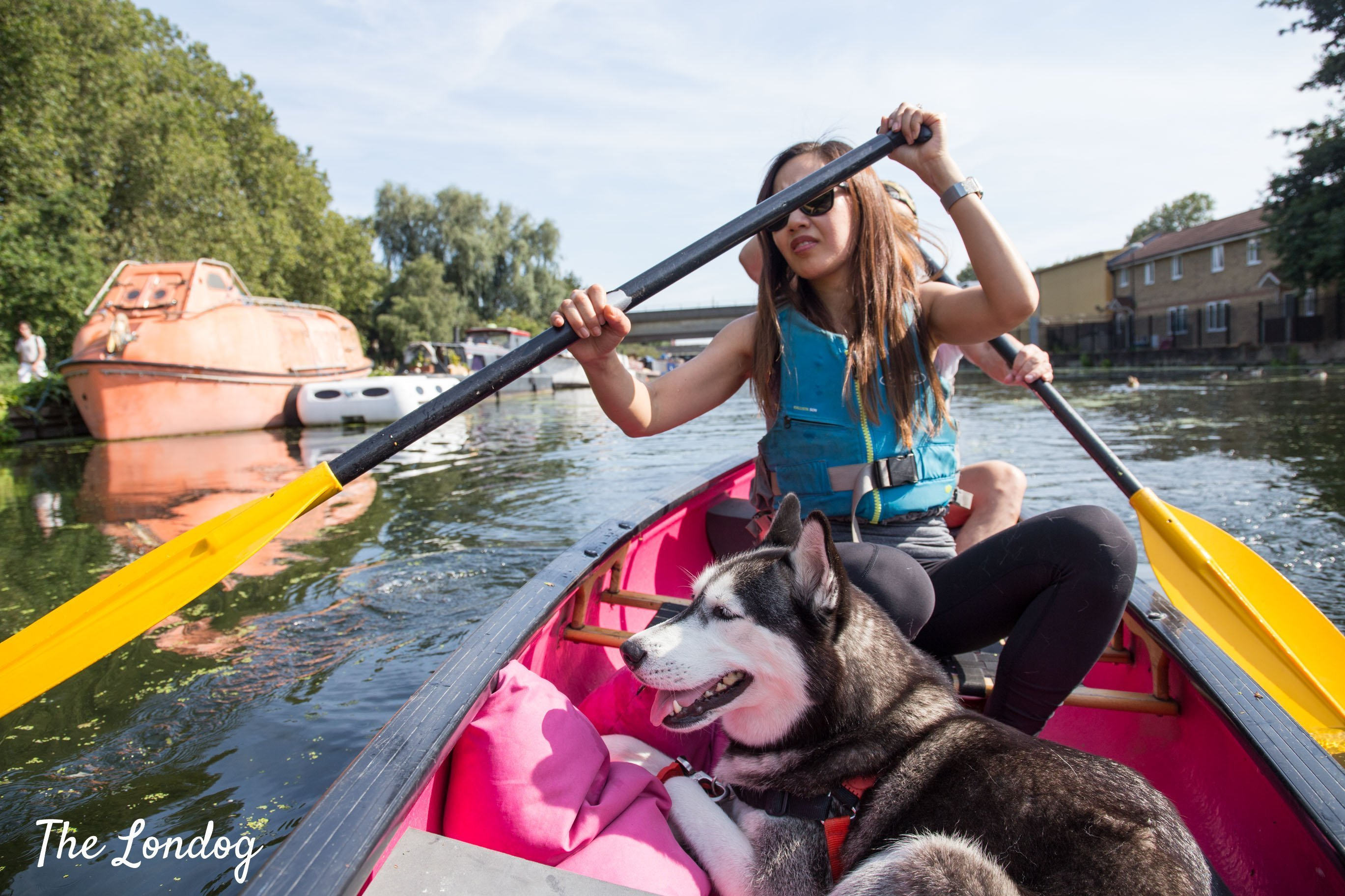 Dog on dog-friendly canoe with his humans in Hackney Wick London