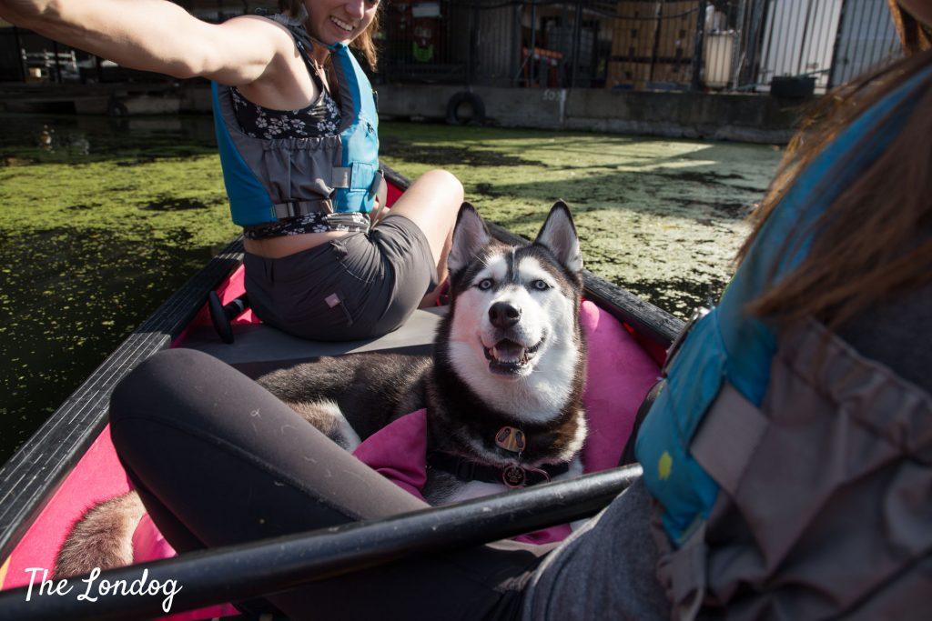 dog on canoe