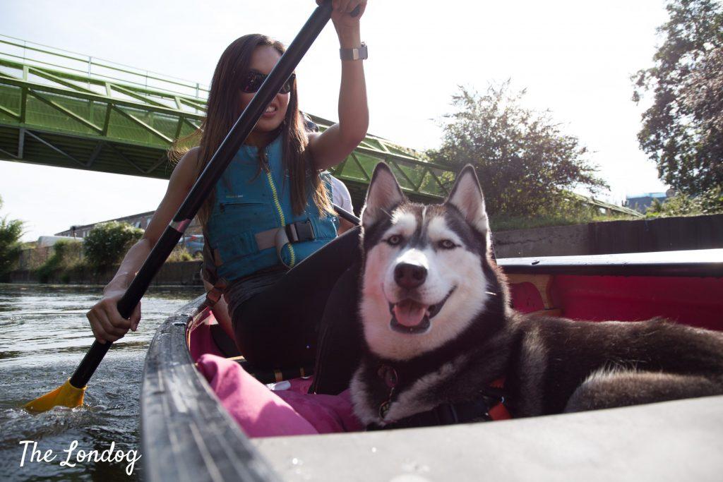 dog smiling on a canoe