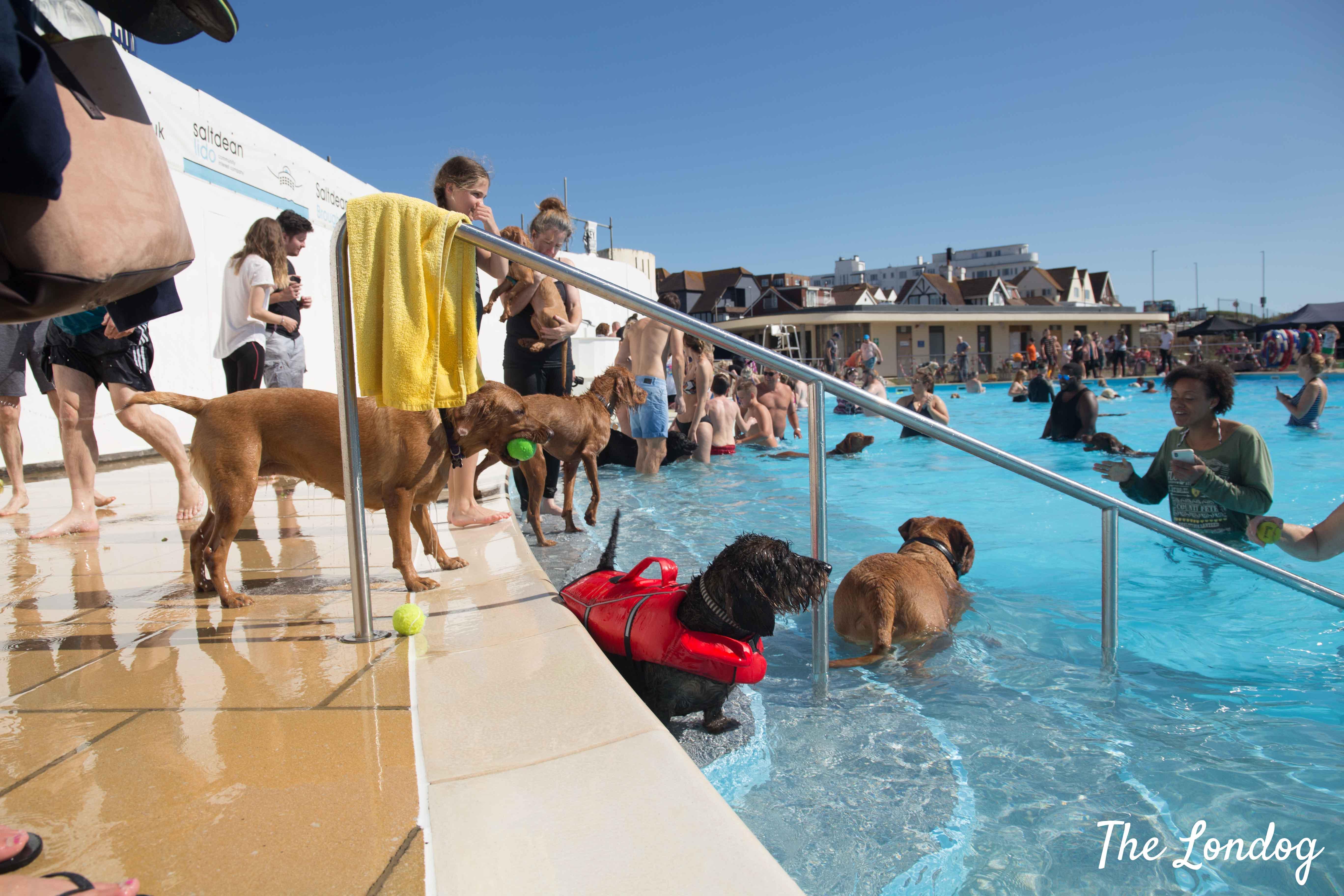 Dogs in swimming pool at Saltdean Lido Dog Swim