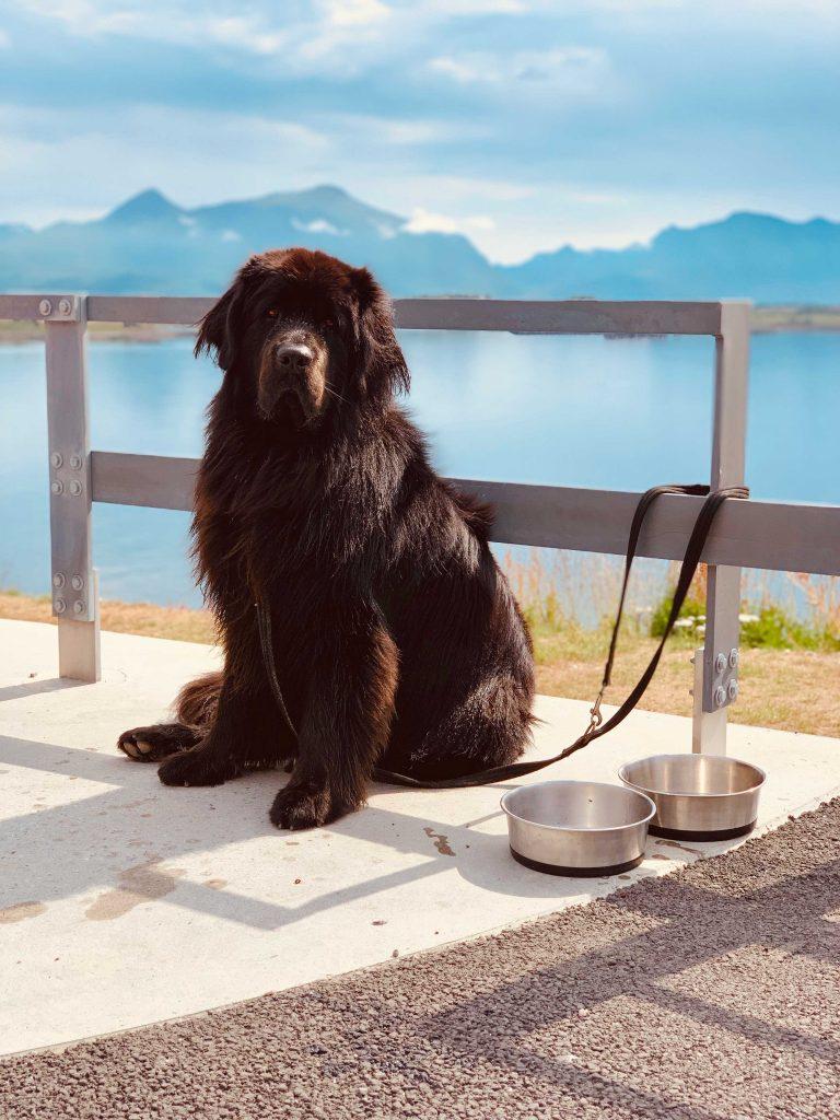 Black dog near wooden fence with Norwegian landscape