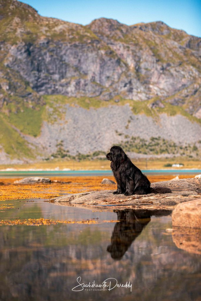 Black dog with dream landscape in Norway