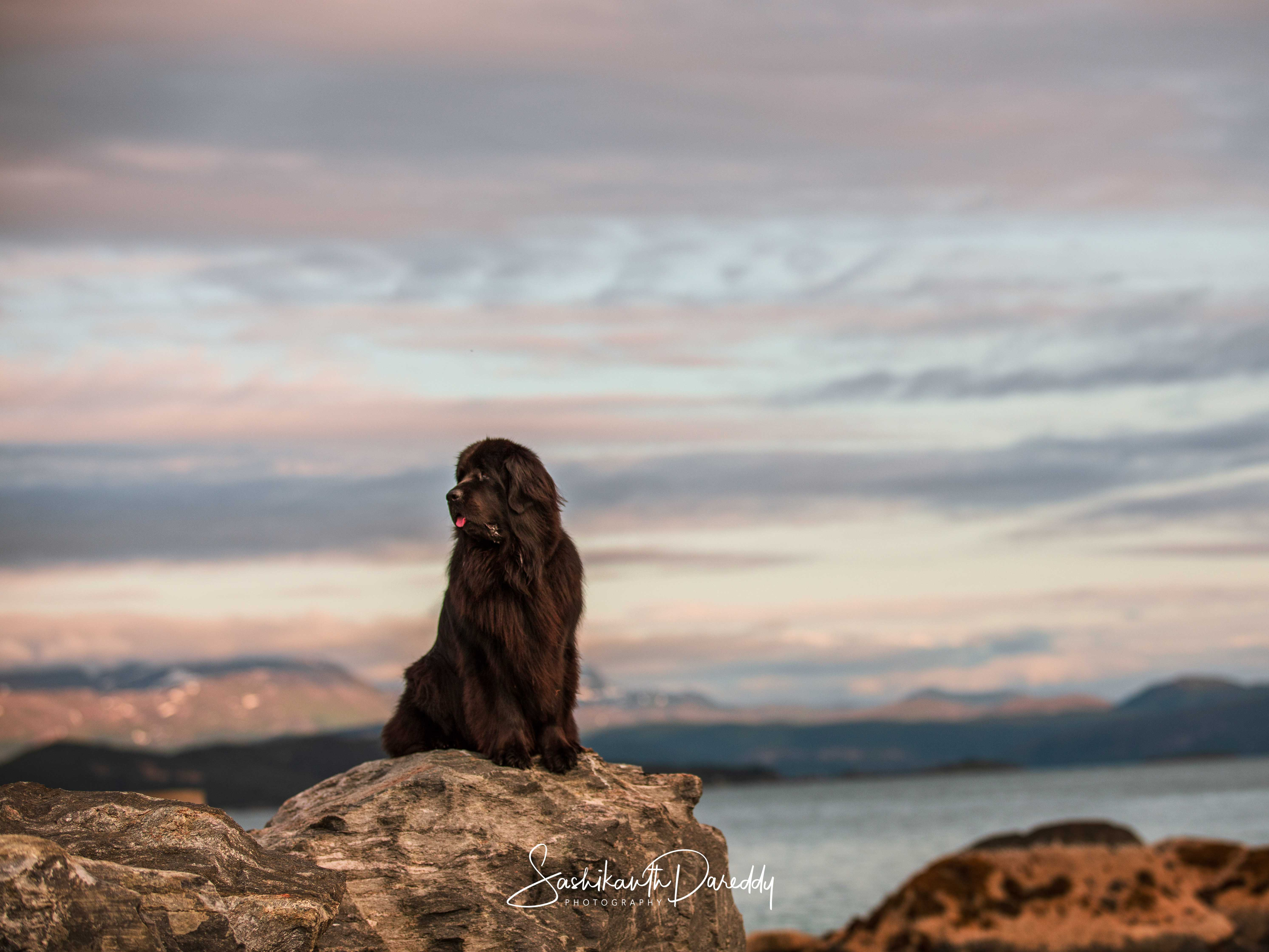 Black dog on a rock on London to Norway road trip