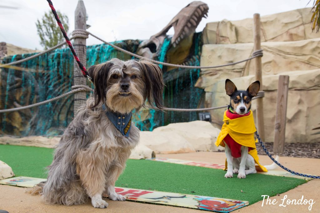 Two small dogs on adventure golf course