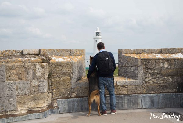 Dog and man perch on a dog-friendly castle crenellation