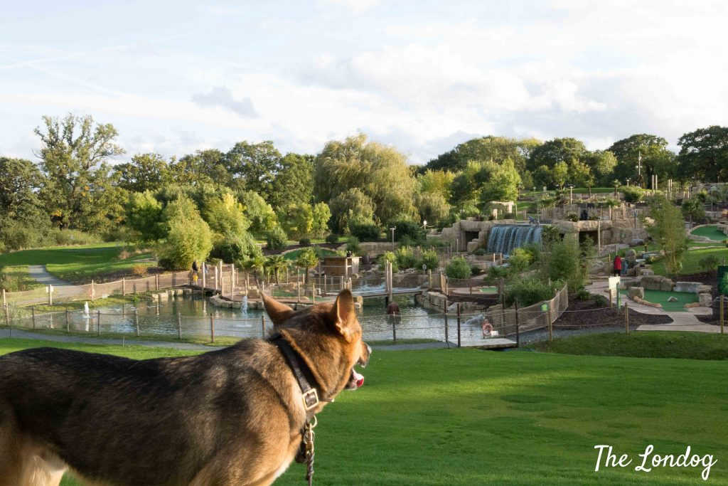 Dog looks at beautiful crazy golf course