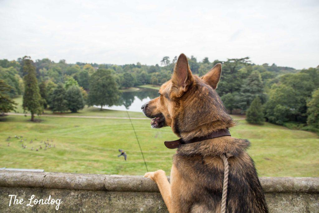 dog at claremont landscape garden