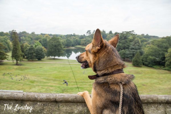 dog at claremont landscape garden