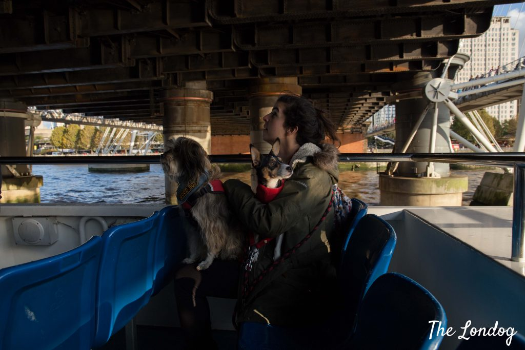 Dogs on boat under bridge on Thames