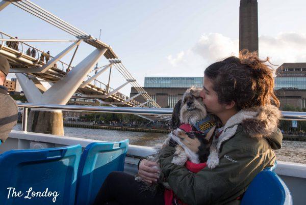 Dog on boat near Tate Modern