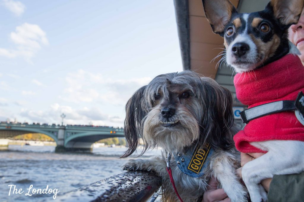 Dogs waiting for dog-friendly boat on the Thames