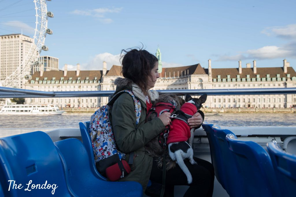 Dogs on boat near London Eye