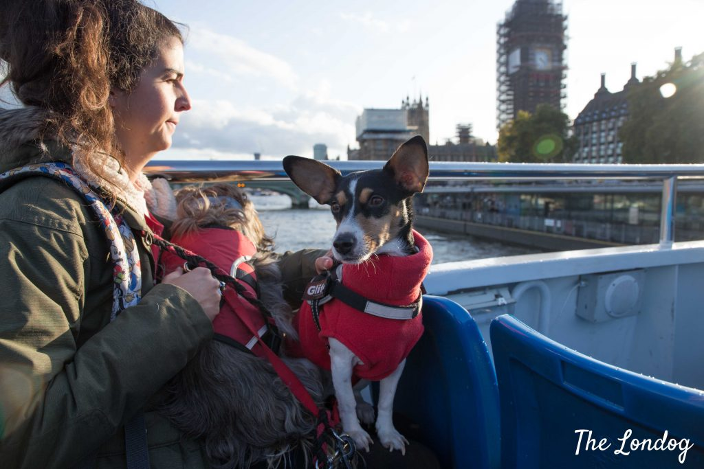 Dogs near the Parliament on a boat