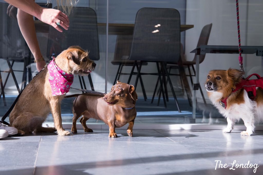 Office dogs gathering