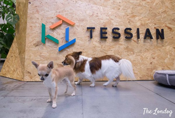 Photo of dogs of Tessian with logo