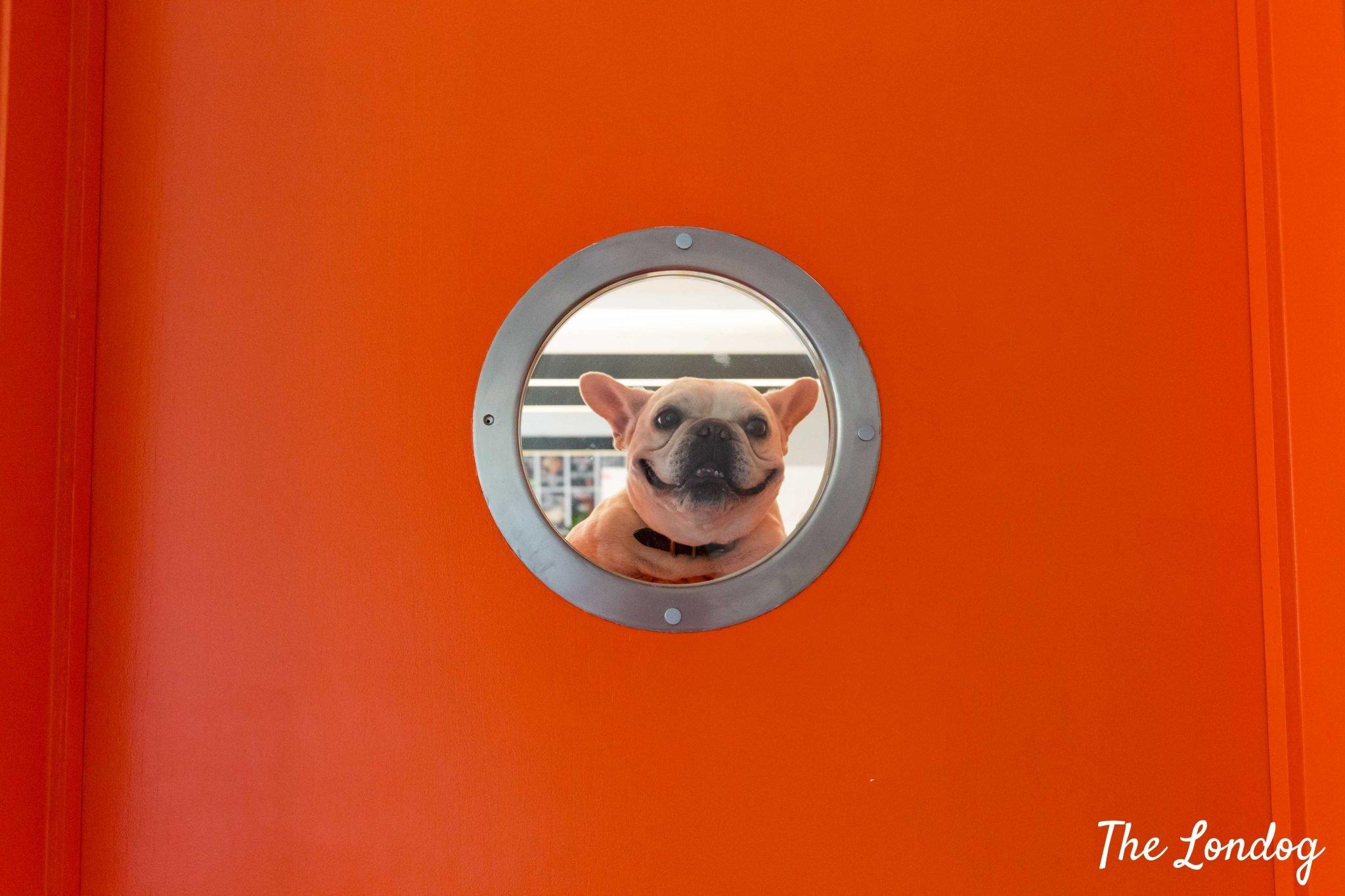 Dog smiles through a door porthole at Wieden + Kennedy