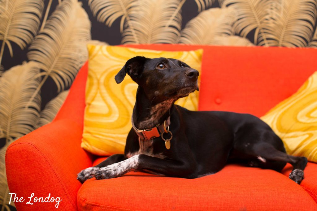 Spanish rescue dog lies on sofa at advertisement agency W+K