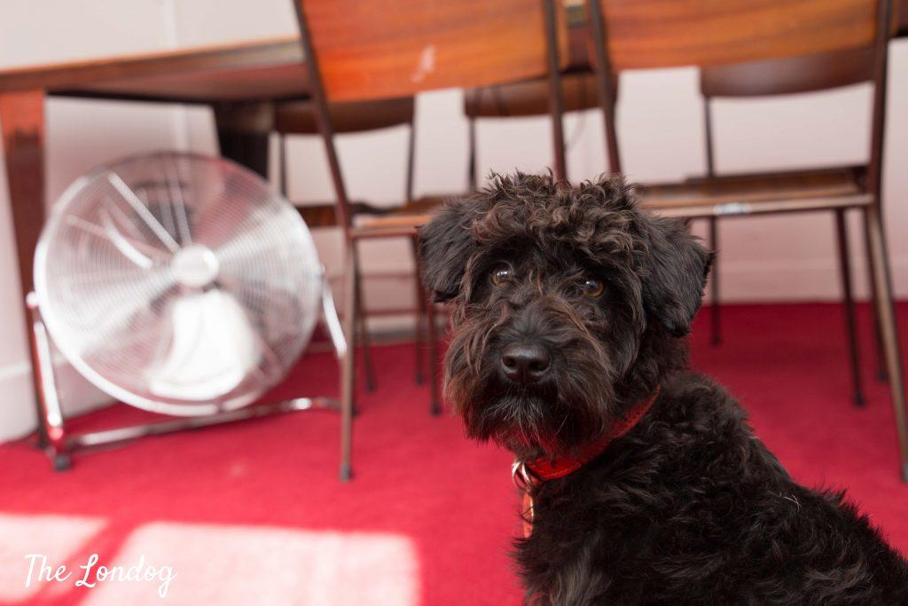 Margo black dog at W+K