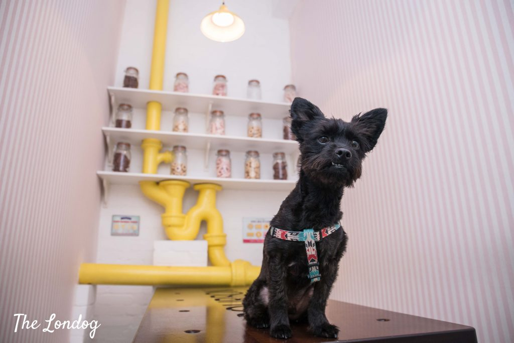Little dog with underbite in biscuit room at W+K agency