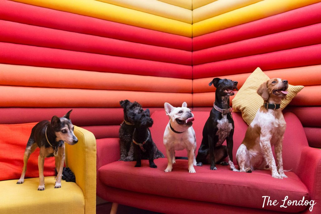Agency dogs of Wieden + Kennedy on red room sofa