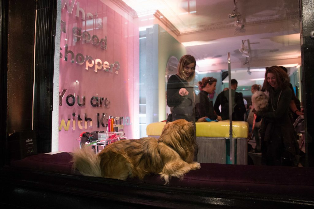 Klarna Pup Up from outside