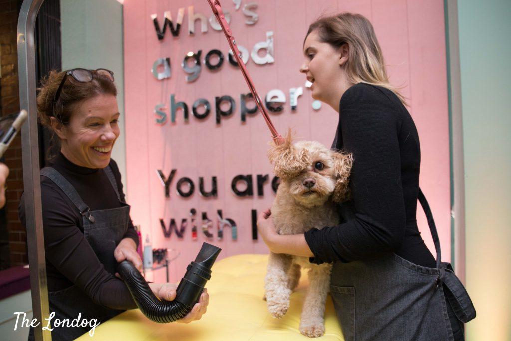Dog being groomed at Klarna Pup Up