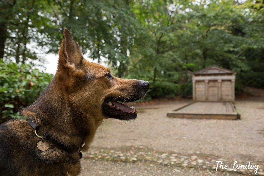 Dog near artifact at National Trust garden